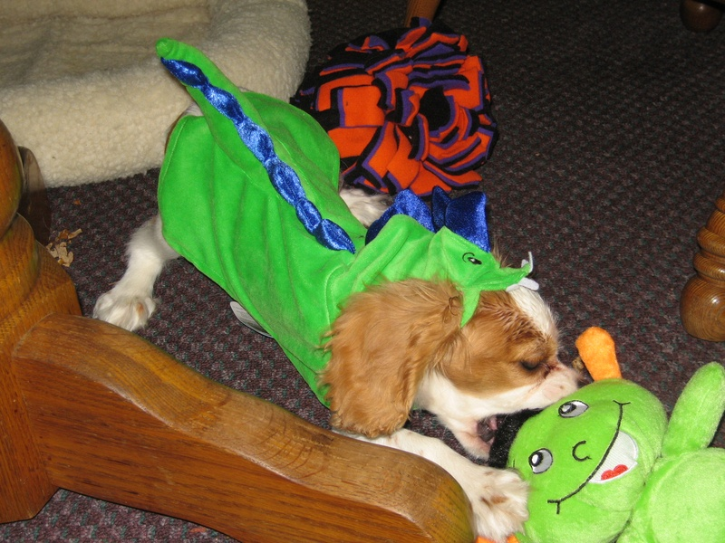 Finnegan looking so cute in his Halloween Costume!